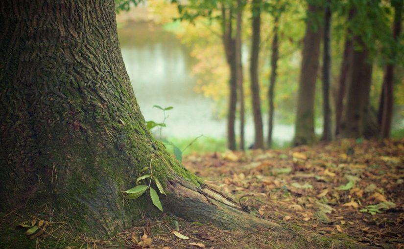 Ładny i {zadbany zieleniec to nie lada wyzwanie, zwłaszcza jak jego konserwacją zajmujemy się sami.